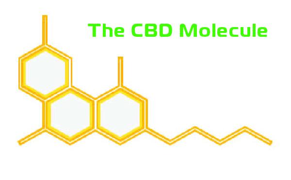 CBD Molecule - SmartCBDmn.com